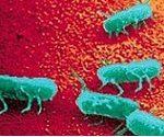 مقاله درمورد بیماری سالمونلا