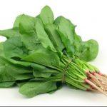 مقاله درمورد چند گیاه دارویی