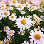 تحقیق درمورد داروهای گیاهی