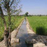 مقاله در مورد رابطه آب و گیاه