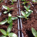 تحقیق در مورد رابطه ی آب و خاک و گیاه