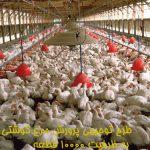 طرح توجیهی پرورش مرغ گوشتی به ظرفیت ۱۰۰۰۰ قطعه