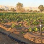 پایان نامه بررسی اثرات تنش خشکی در مراحل انتهایی رشد بر صفات زراعی و شاخصهای رشد ارقام بهاره کلزا