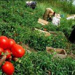 مقاله در مورد آثار ضایعات محصولات کشاورزی بر جنبه های مختلف اقتصادی